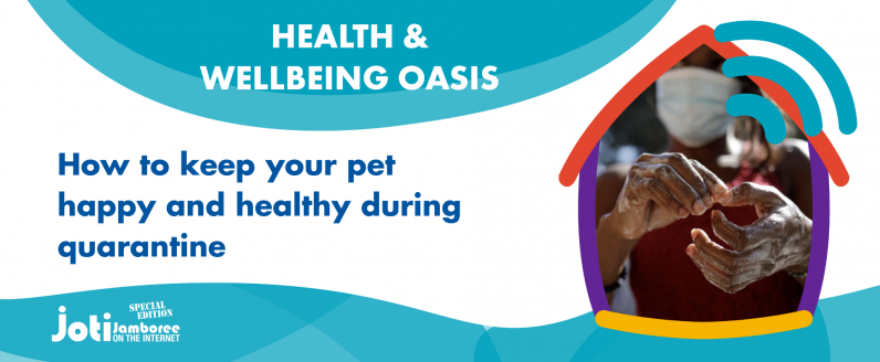 How to keep your pet happy and healthy during quarantine